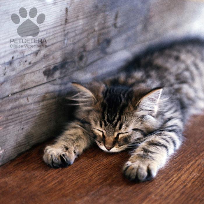 Veja algumas maneiras de tirar o tédio do seu gato em casa