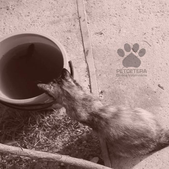 Por que os gatos adoram água sanitária?