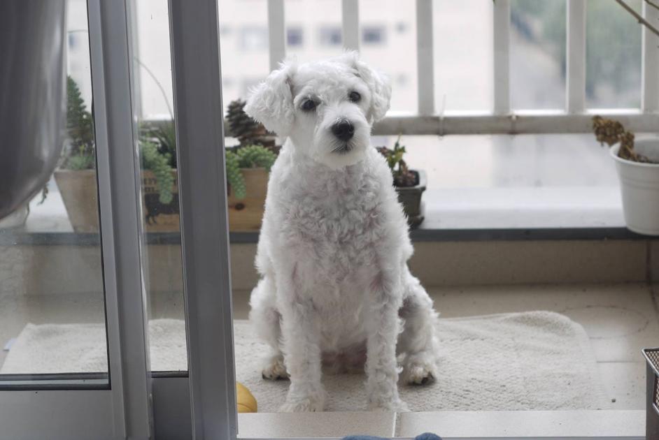 Moro em prédio. Eu posso ter animais em apartamento?