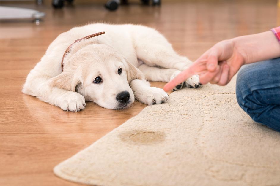As necessidades do seu dog