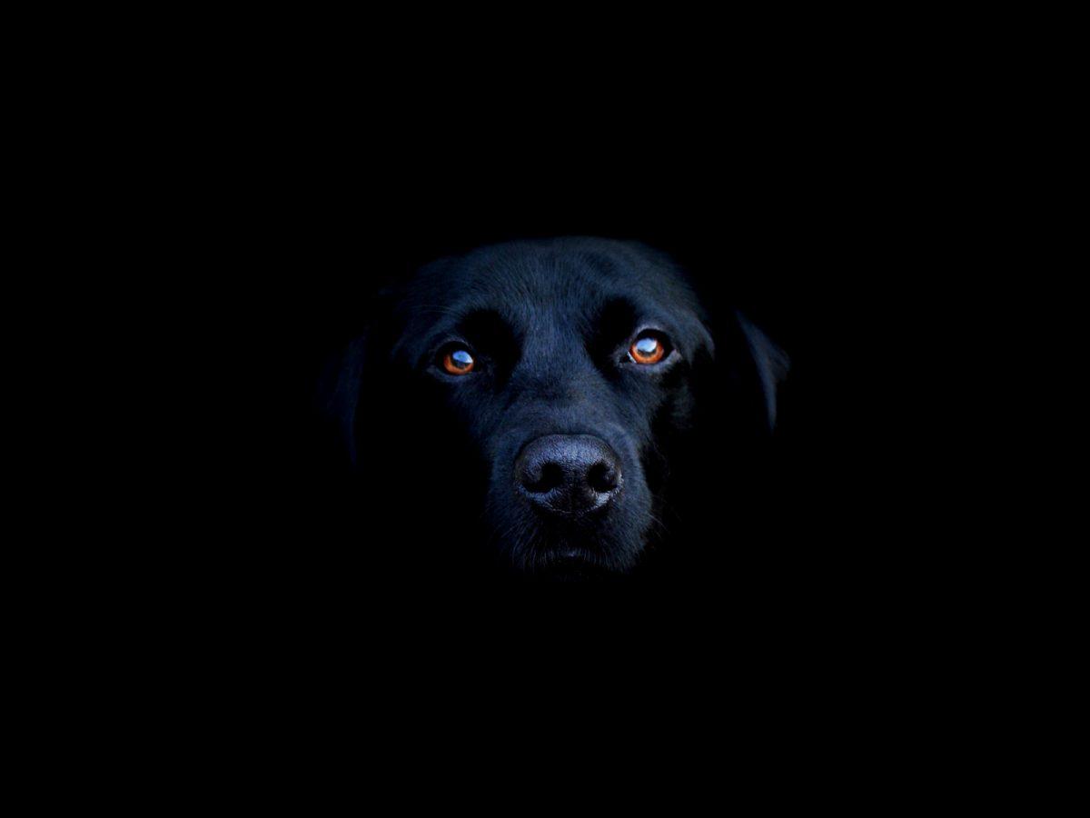 Os cães enxergam no escuro?
