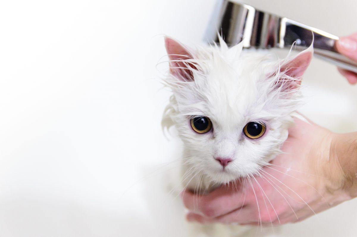 Banho em gato é necessário?
