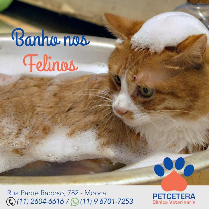 Banho nos Felinos
