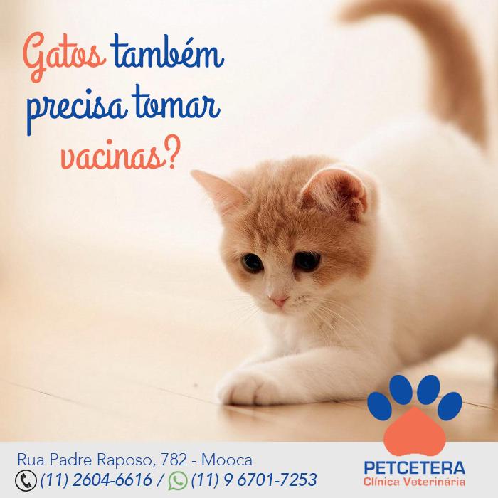 Gatos também precisa tomar vacinas?