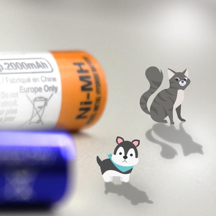 Intoxicação pela ingestão de pilhas e baterias em cães e gatos