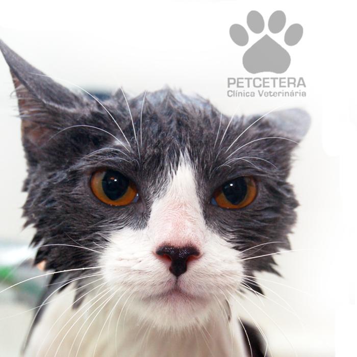 Quando dar banho em gatos
