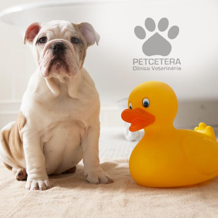 Por que precisamos dar banho nos cachorros?