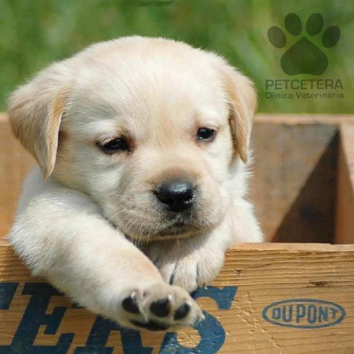Você sabe o que leva a imunidade do seu cachorro a baixar?